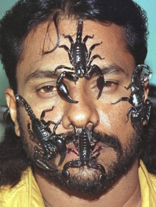 Image: Snake King
