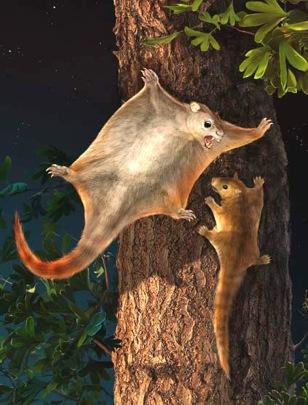 Image: Flying mammals