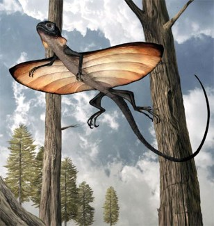 Image: Gliding lizard