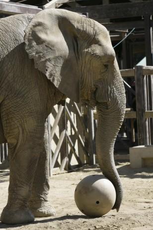Zoo elephant makes exit to ani...