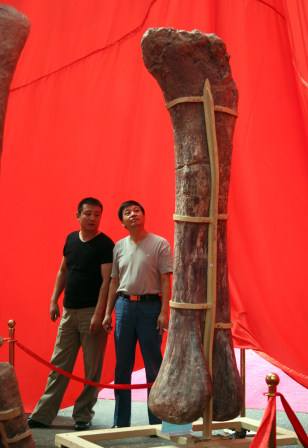 IMAGE: A dinosaur leg bone on display in Zhengzhou, in China's central Henan Province, on Tuesday.