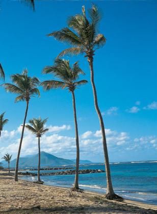 Image: Nevis beach