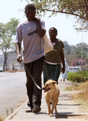 Image: Dog in Zimbabwe