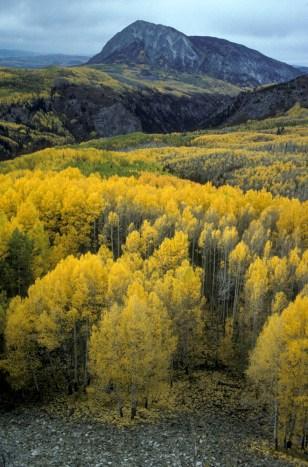 Image: Colorado Rockies