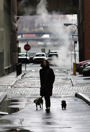 Image: Walking with the dogs around N.Y.