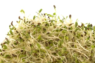 Image: Sprouts