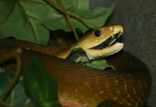 Ten scariest animals in nature - Technology & science - Science