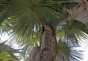Image: Palm