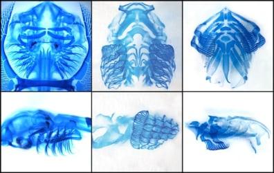 Image: Skeletal anatomies