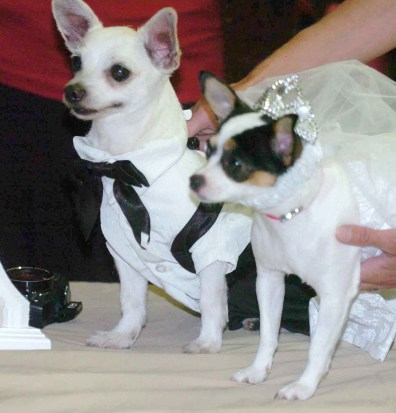 Image: Dogs Sparky Perez, left, and Peanut Bobik, right