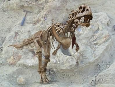 Image: Reconstructed skeleton of abelisaurid Majungasaurus crenatissimus