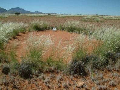"Image: Bare spot, or ""fairy circle"" in Nambia"
