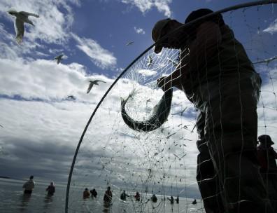 Image: Sockeye salmon fishermen
