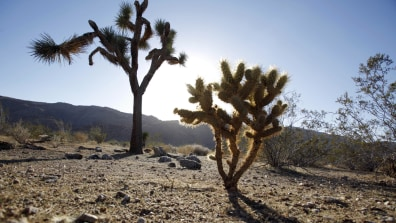 Image: Joshua Tree National Park