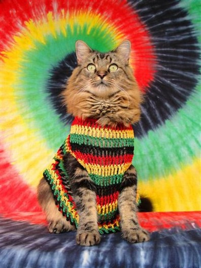 Image: Lorenzo the cat in Rasta outfit