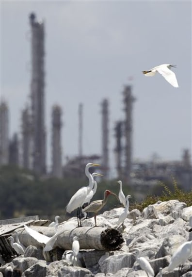 Image: Egrets at nesting site