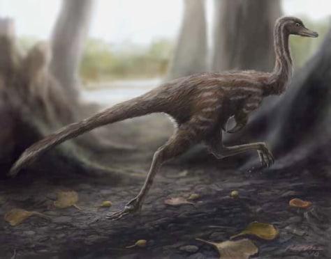 Image: Xixianykus zhangi dinosaur