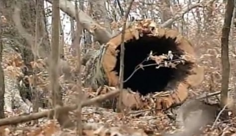 Image: Felled hollow tree in Knox County, Ohio.