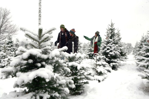 Image: Christmas tree farm