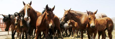 Image: Wild horses