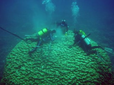 Image: Scuba divers collect coral samples