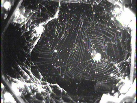 Image: Orb-weaving spiders