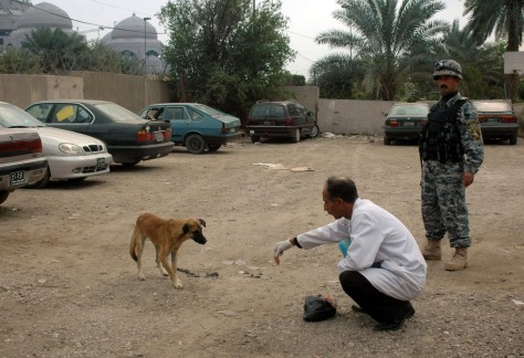 Image: Dr. Mazin Hameed, a veterinarian, uses poisoned meat to lure a stray dog