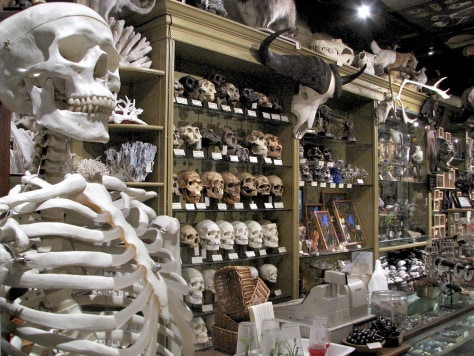Image: The Evolution Store