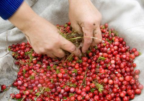 Image: Cranberries