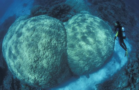 Image: Corals in Great Barrier Reef