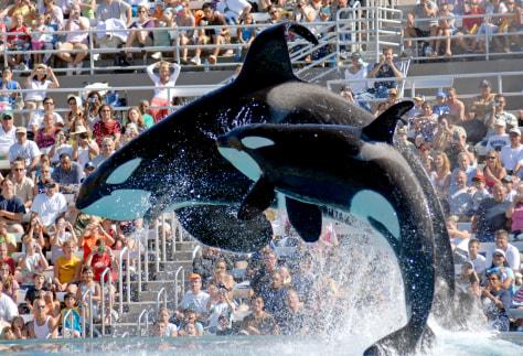 Image: SeaWorld
