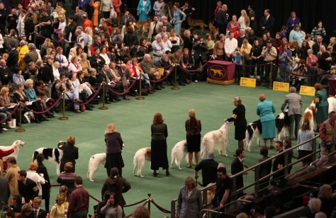 Image: Westminister dog show