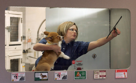 Image: Petland employee