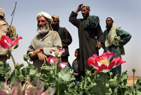 mage: U.S. Marines Patrol Near Opium Fields Of Southwest Afghanistan