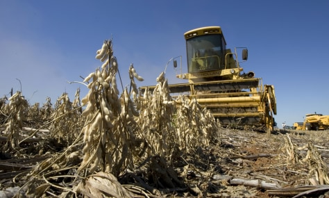 Image: Soybean harvest