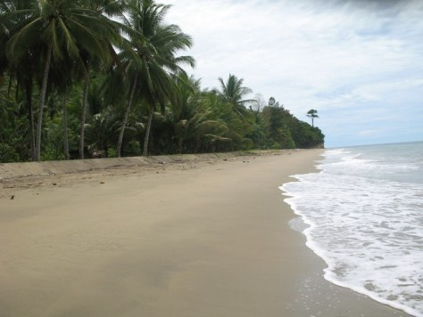 Image: Beach bought to protect maleo birds