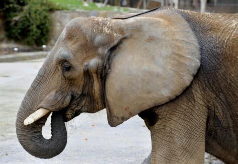 Image: Susi the Elephant
