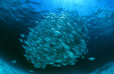 Image: School of fish
