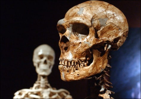 Image: reconstructed Neanderthal skeleton