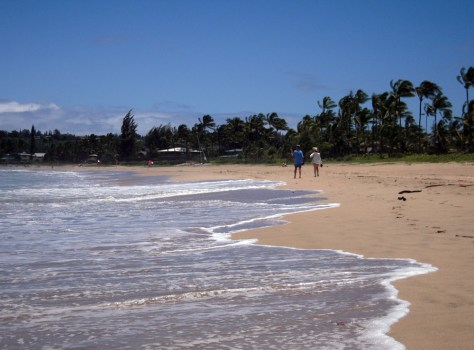 Image: Life's a beach