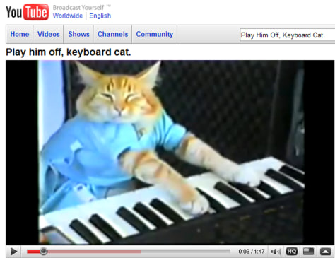 Image: Keyboard playing cat on Internet