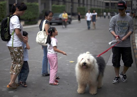 Image: China's one-dog policy