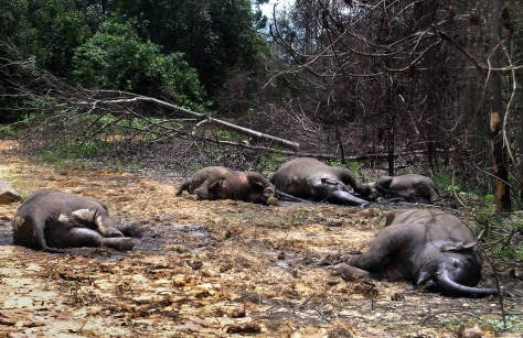 Image: Poisoned wild elephants in Indonesia