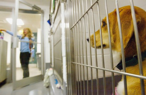 Image: Dog in animal shelter