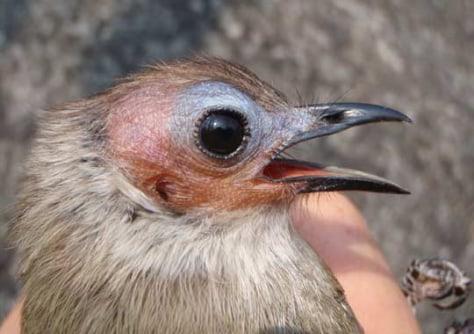 Image: Bird