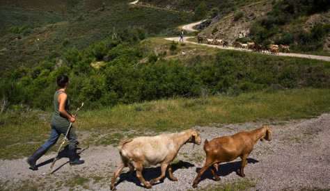 Image: An American traveler works on a farm in Spain