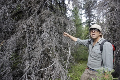 Image: Rob Legare shows tree attacked by beetles