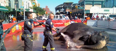 Image: Firefighters hose down an elephant