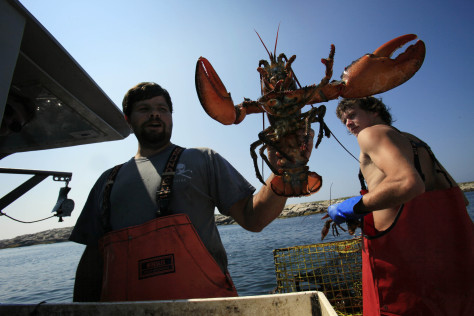 Image: Lobsterman Nick Philbrook holds a lobster caught off Matinicus Island, Maine