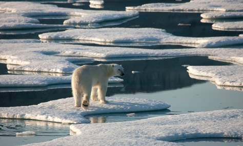 Image: Polar bear on sea ice